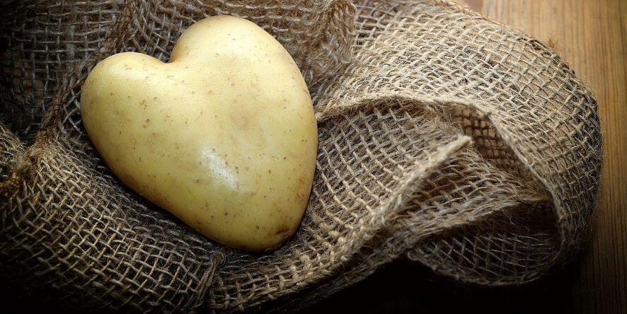 Livre sur la pomme de terre